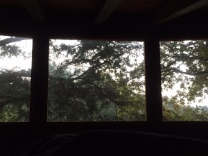 Morning View From Treehouse